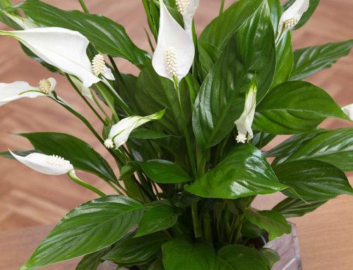 Breathe Easier With Indoor Plants